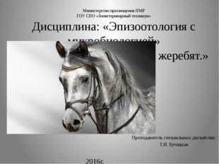 Министерство просвещения ПМР ГОУ СПО «Зооветеринарный техникум» Дисциплина: «