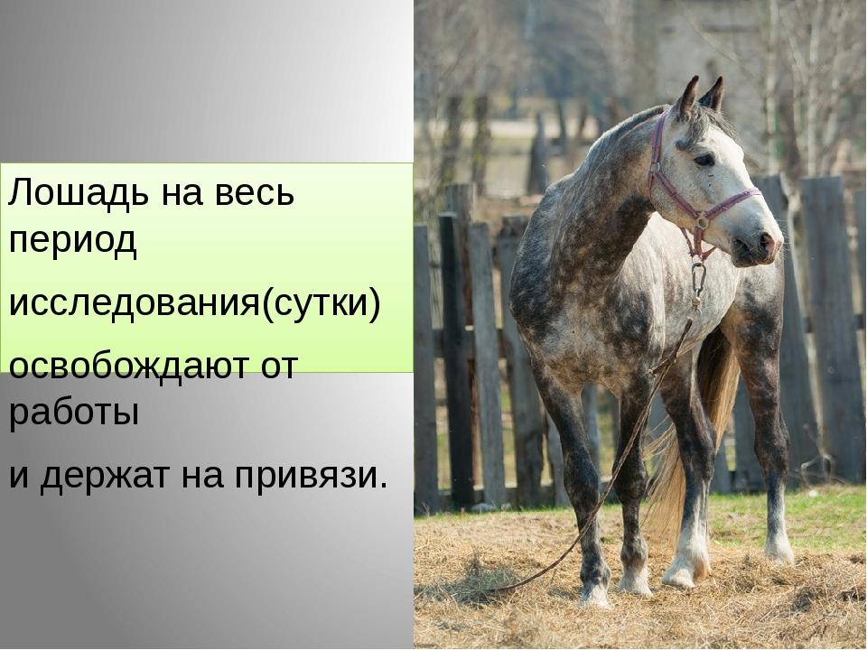 Лошадь на весь период исследования(сутки) освобождают от работы и держат на п...