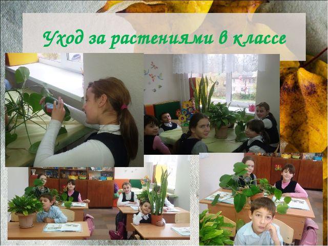 Уход за растениями в классе