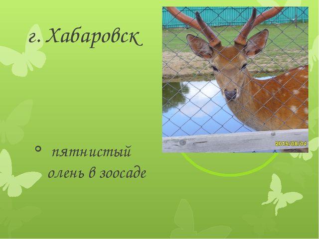 г. Хабаровск пятнистый олень в зоосаде