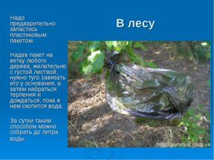 В лесу Надо предварительно запастись пластиковым пакетом. Надев пакет на ветк