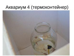 Аквариум 4 (термоконтейнер)