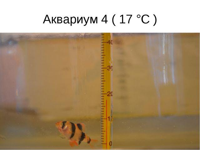 Аквариум 4 ( 17 °C )