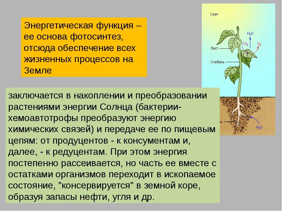 Способны ли побеги шиповника к фотосинтезу поднимают