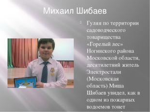 Михаил Шибаев Гуляя по территории садоводческого товарищества «Горелый лес» Н