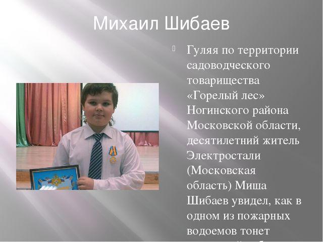 Михаил Шибаев Гуляя по территории садоводческого товарищества «Горелый лес» Н...