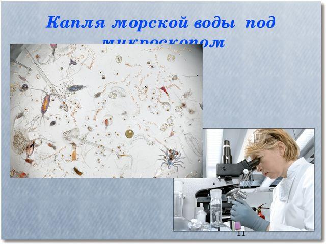 Капля морской воды под микроскопом *