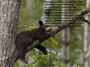 Важная особенность заповедника — смешение видов животных, далеких по своему г