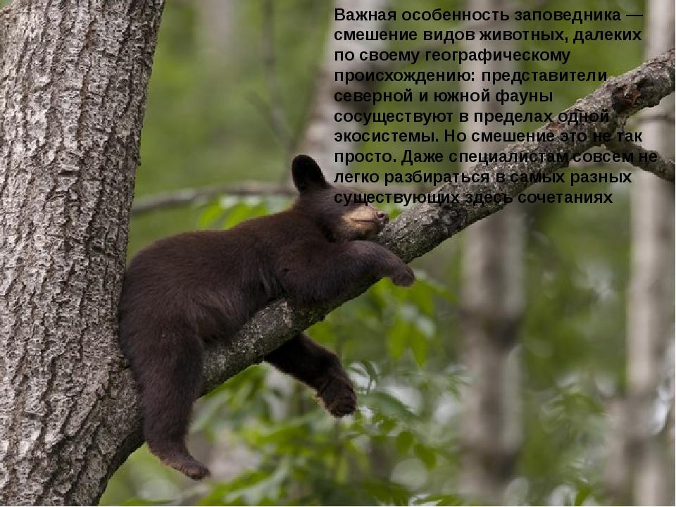 Важная особенность заповедника — смешение видов животных, далеких по своему г...