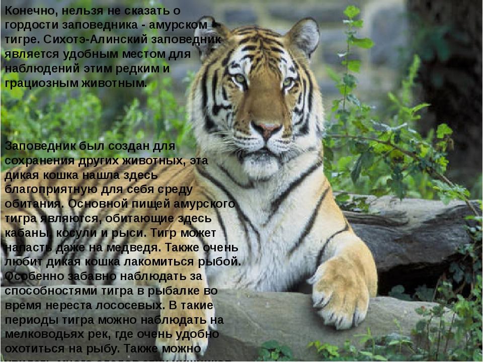 Конечно, нельзя не сказать о гордости заповедника - амурском тигре. Сихотэ-Ал...
