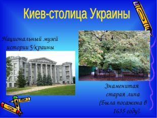 Национальный музей истории Украины Знаменитая старая липа (Была посажена в 16