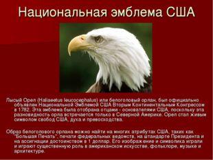 Национальная эмблема США Лысый Орел (Haliaeetus leucocephalus) или белоголовы