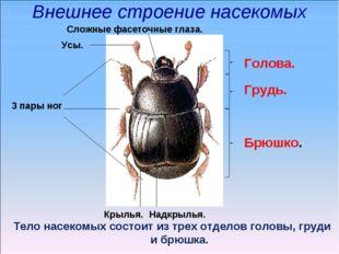 Внешнее строение насекомых Тело насекомых состоит из трех отделов головы, гру