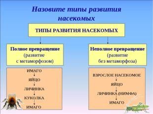 ТИПЫ РАЗВИТИЯ НАСЕКОМЫХ Назовите типы развития насекомых Полное превращение (