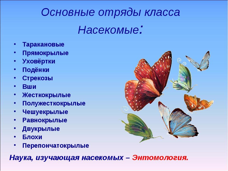 Основные отряды класса Насекомые: Таракановые Прямокрылые Уховёртки Подёнки С...