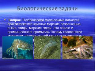 Вопрос: Головоногими моллюсками питаются практически все крупные морские поз