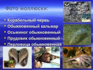 Корабельный червь Обыкновенный кальмар Осьминог обыкновенный Прудовик обыкнов