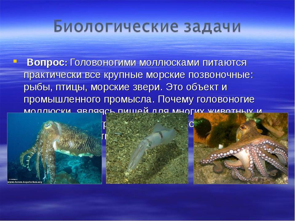 Вопрос: Головоногими моллюсками питаются практически все крупные морские поз...