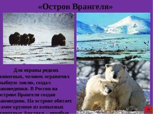 Сутками бродит великан Арктики по снежной пустыни в поисках добычи. Он часам