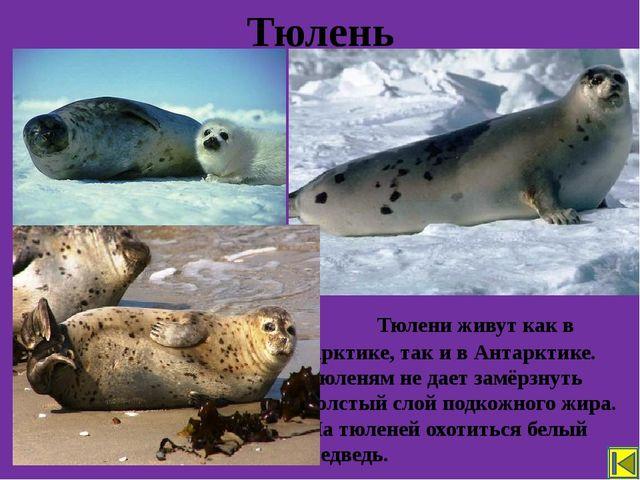 Для охраны редких животных, человек ограничил рыбную ловлю, создал заповедни...