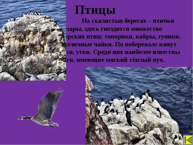 Выберите животных, которые обитают в Арктике. Закрепление Лось Бурый медведь...