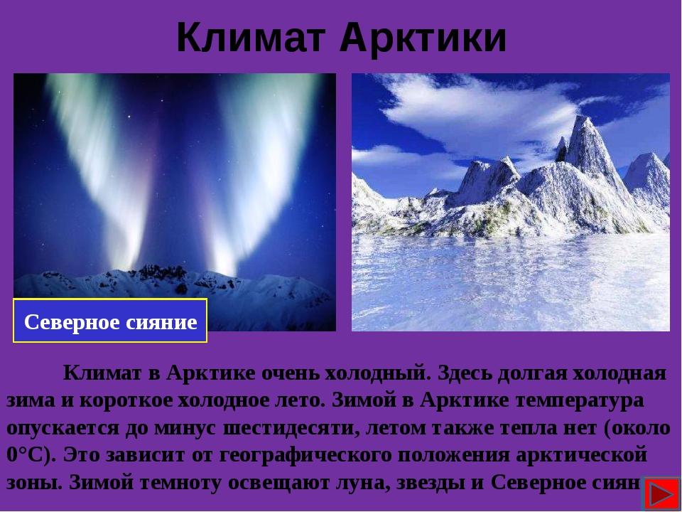 Животный мир Белый медведь Птицы Тюлень Морж