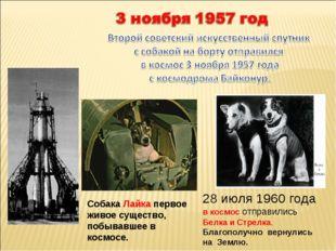 Собака Лайка первое живое существо, побывавшее в космосе. 28 июля 1960 года в