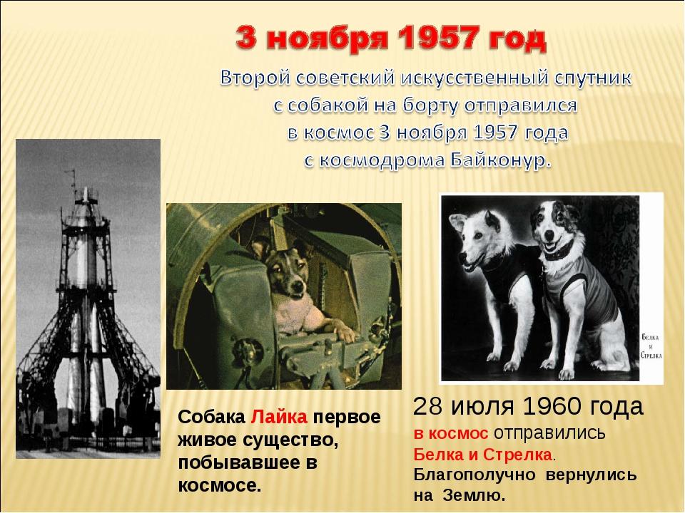 Собака Лайка первое живое существо, побывавшее в космосе. 28 июля 1960 года в...