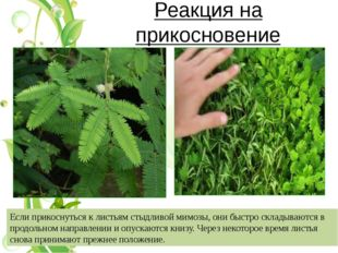 Развитие фасоли от семени до взрослого растения