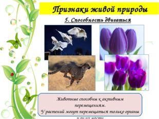 Признаки живой природы 7. Размножение
