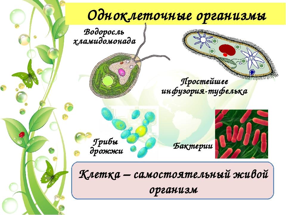 Признаки живой природы 2. Определенный химический состав живых организмов бе...