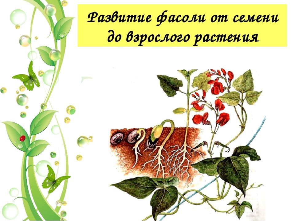 Признаки живой природы 9. Старость и гибель