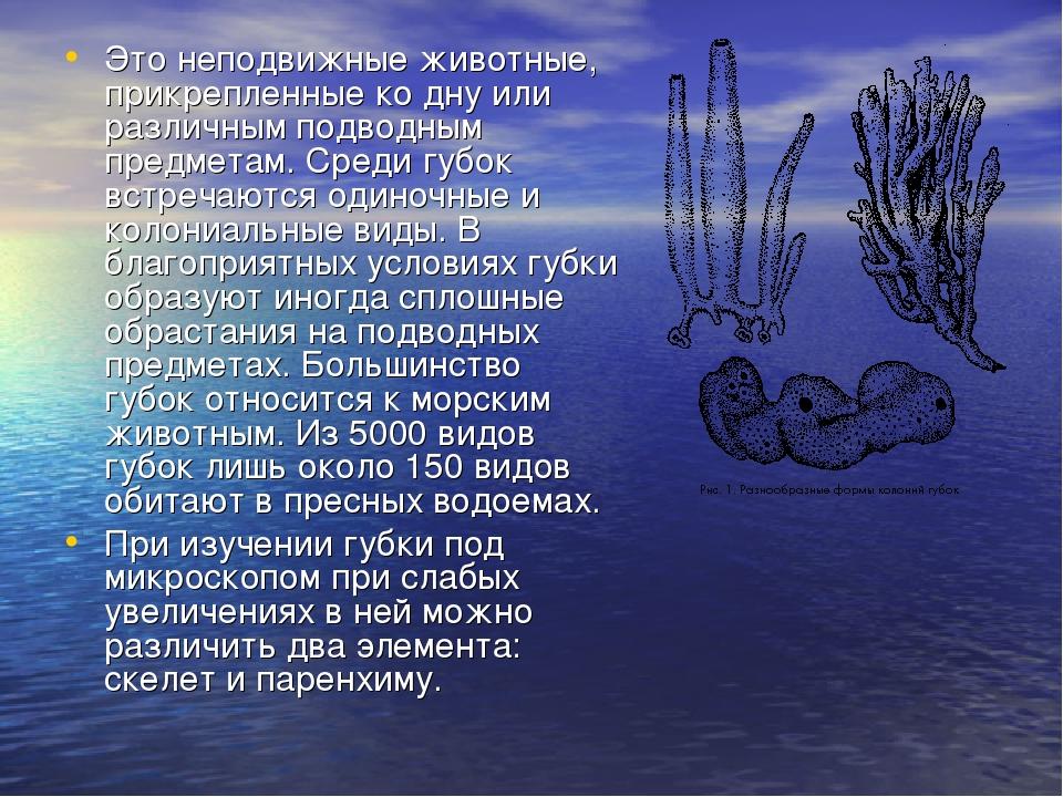 Это неподвижные животные, прикрепленные ко дну или различным подводным предме...