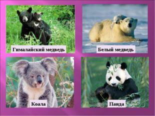 Белый медведь Панда Коала Гималайский медведь