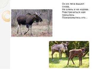 Он из леса вышел снова, Не олень и не корова. Повстречаться нам пришлось Позн