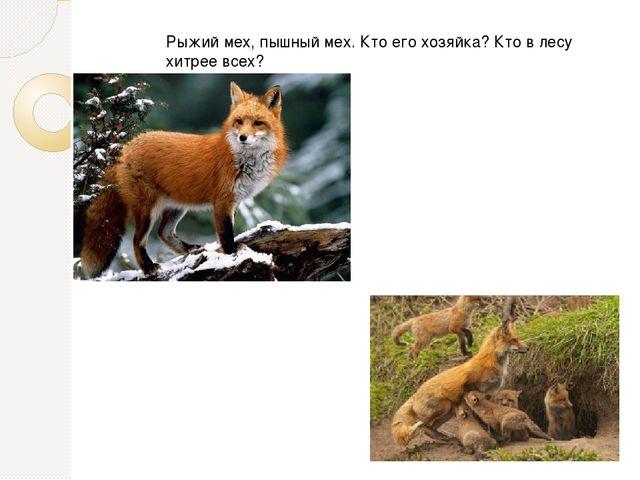 Рыжий мех, пышный мех. Кто его хозяйка? Кто в лесу хитрее всех?