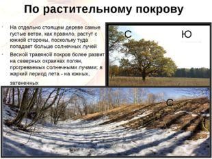 По растительному покрову На отдельно стоящем дереве самые густые ветви, как п