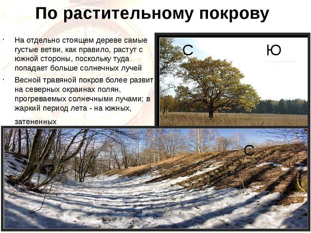 По растительному покрову На отдельно стоящем дереве самые густые ветви, как п...