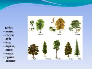 – - клён; – осина; – сосна; – дуб; – ель; – берёза; – липа; – ольха; – груша