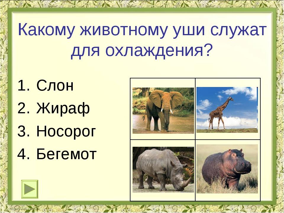 Вопрос 2 коровы, бегемоты, жирафы волки, лисы, кабаны лоси, тюлени, киты какие из указанных животных относятся к