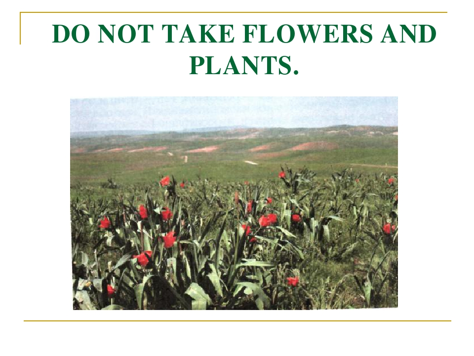 DO NOT TAKE FLOWERS AND PLANTS.