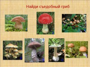 Найди съедобный гриб 1 2 3 4 5 6 7