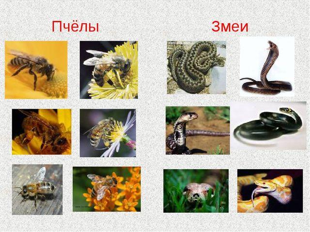 Пчёлы Змеи