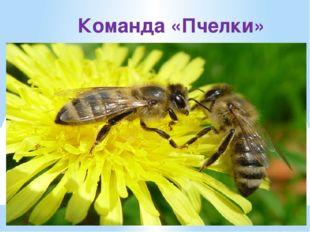 Команда «Пчелки»