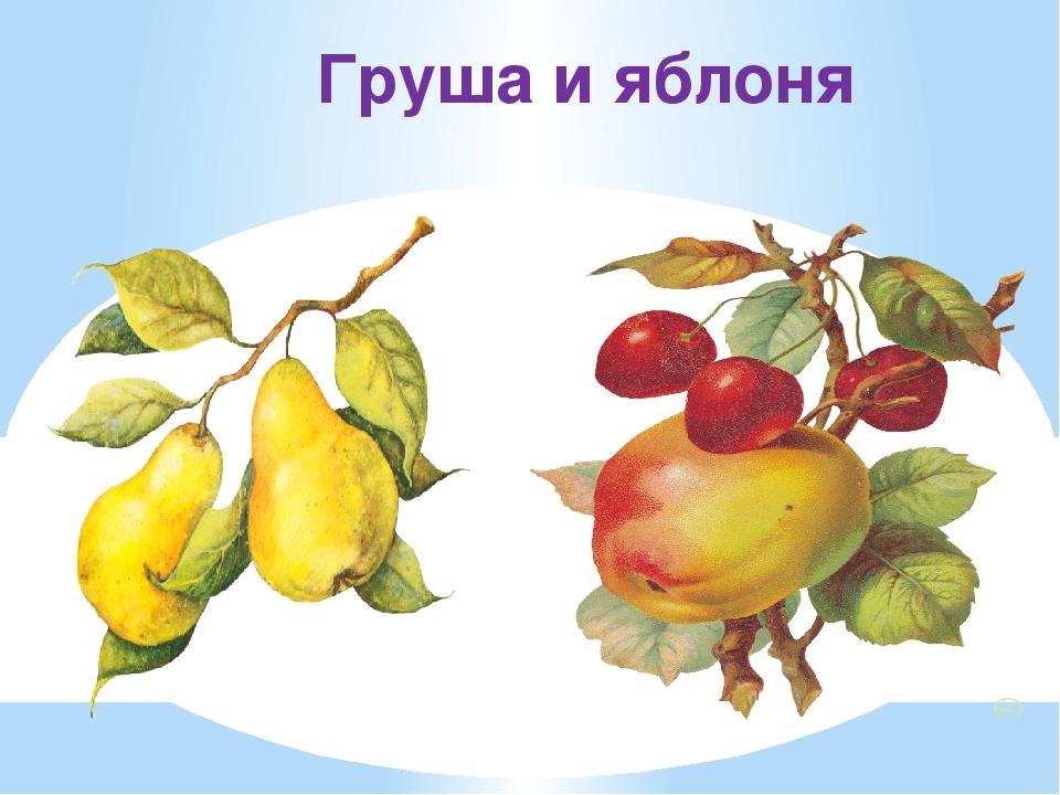 Груша и яблоня