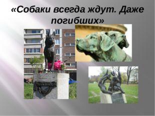 «Собаки всегда ждут. Даже погибших»
