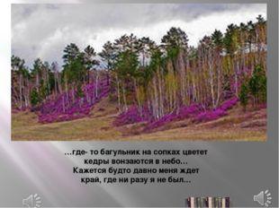 …где- то багульник на сопках цветет кедры вонзаются в небо… Кажется будто дав