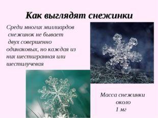 Как выглядят снежинки Среди многих миллиардов снежинок не бывает двух соверше