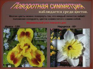 Многие цветы можно повернуть так, что каждый лепесток займёт положение соседн