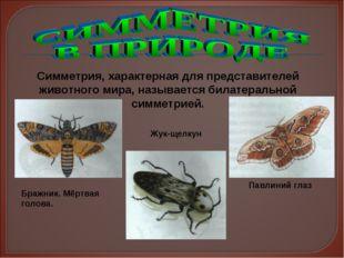 Симметрия, характерная для представителей животного мира, называется билатера